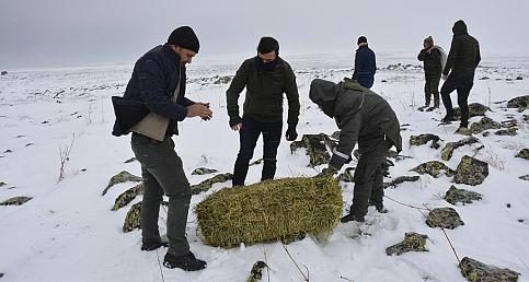 Avcılar yaban hayvanları için yem bıraktı