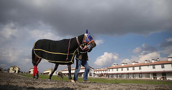 Suruç'un şampiyon atları