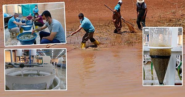 10 milyon balık baraj göletine bırakılacak
