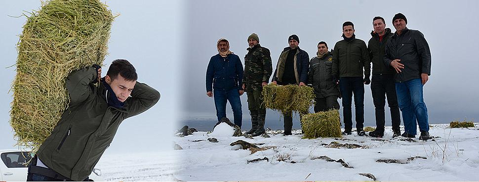 Karacadağ eteklerinde hayvanlar için yem bırakıldı