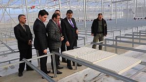 Çorum'da üretilecek tohum ve bitkiler Urfa'ya da gelecek