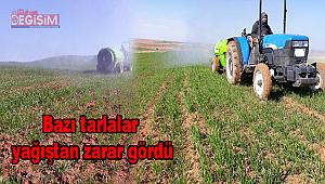 Çiftçilerin yabani otlarla mücadelesi başladı