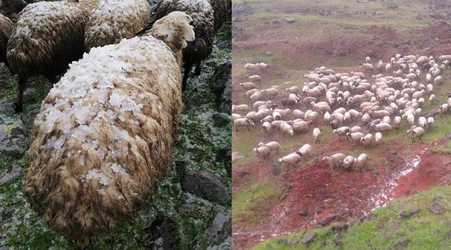 Çobanlar Dolu'ya hazırlıksız yakalandı