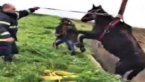 Kanala Düşen At Kurtarıldı