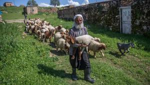 Şanlıurfa'da 5 bin lira'ya çoban bulamıyorlar