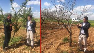 Suruç'ta doludan etkilenen araziler tespit ediliyor