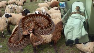 Hayvanları otlatan çobanı yılan soktu