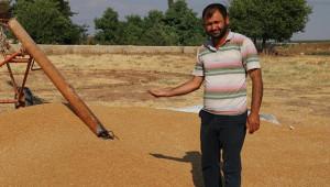 30 ton buğday ile birlikte kayıplara karıştı