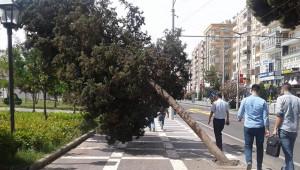 Ağaçlar, şiddetli fırtınaya dayanamadı