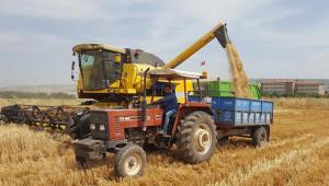 Arpa ve buğdayda yüksek rekolte
