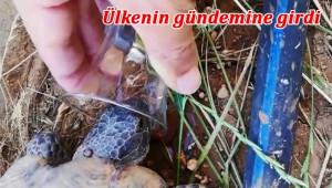 Bardak ile kaplumbağaya su içirdi