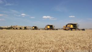 Kaliteli Urfa buğdayına yurt dışından talep
