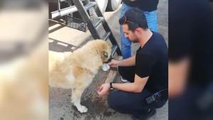 Polis memuru suyunu köpekle paylaştı