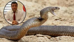 Yılanlar arttı, ne yapmalıyız?