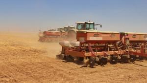 110 Bin dekar'a mısır ekimi yapılıyor