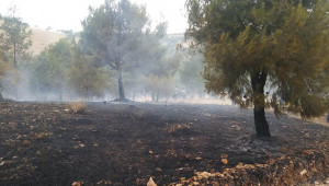 Bozova'da orman yangını!