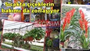 Sıcaklar, çiçekçilerin satışlarını etkiliyor