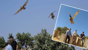 Urfa'da tedavi edilen kuşlar doğaya salındı