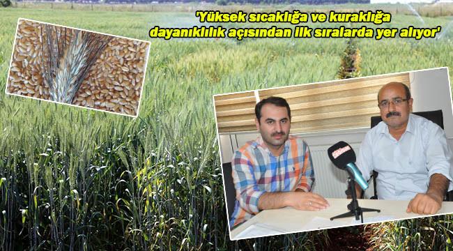 'Yabancı tohumların yerini milli çeşitlerimiz alacak'