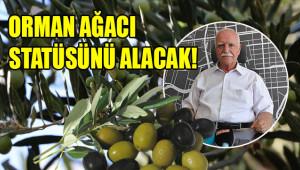 'Zeytin ağacı Urfa'nın kaderini değiştirecek'