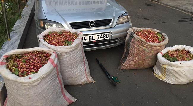 Fıstık hırsızları kaza yapınca yakalandı