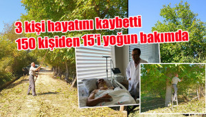 Ağaçtan düşen yüzlerce kişi hastanelik oldu