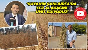 Urfa tarımına yeni alternatif!