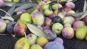 Zeytinyağı işlem ücretleri belirlendi