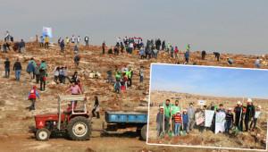 OSB bin 500 dönümlük araziye fidan dikti