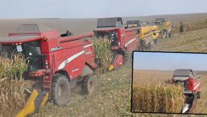 Tigem'de mısır hasadı başladı