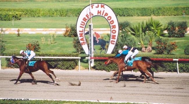 Urfa'daki at yarışlarından servet kazandı