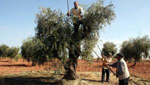 Bakan Pakdemirli'den zeytin üreticilerine müjde