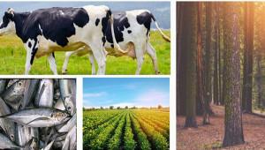 En fazla büyüme hızı tarım ve ormancılıkta gerçekleşti