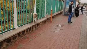 Köpek demir parmaklığa sıkıştı