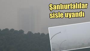Şanlıurfa'da yoğun sis etkili oldu