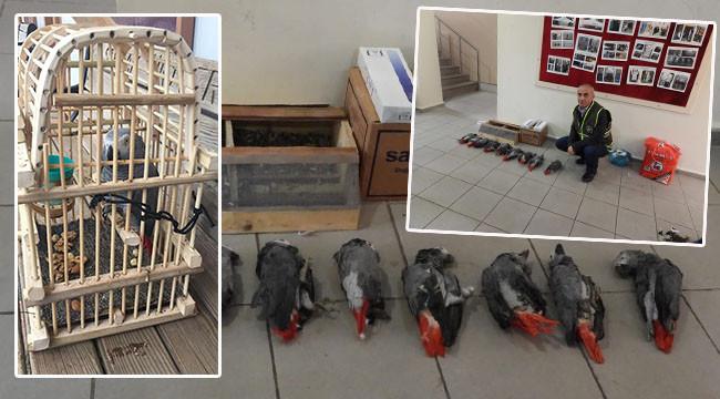 Sınırdan geçirilmek istenen papağanlar öldü