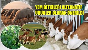 Urfa'da ahır hayvancılığı yaygınlaştırılacak