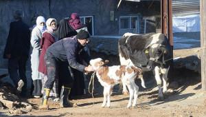 Bakanlıktan depremzedelere hayvan ve yem desteği