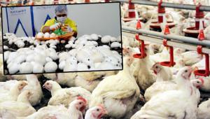 Mantar atölyesi ve tavuk çiftliği kurulacak