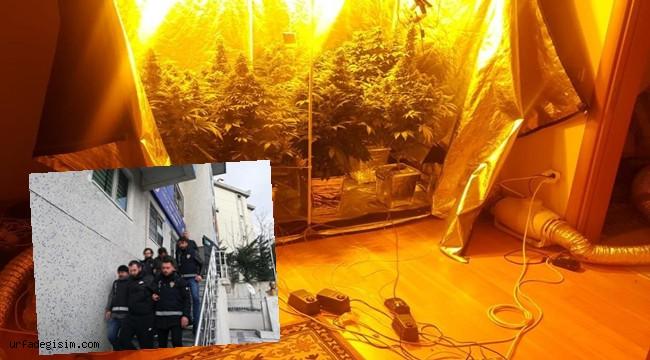 Evi uyuşturucu tarlasına çeviren şahıslara operasyon