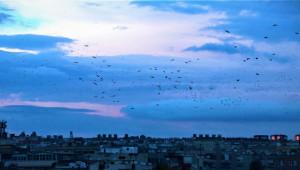 Şanlıurfa semalarında kuşların dansı