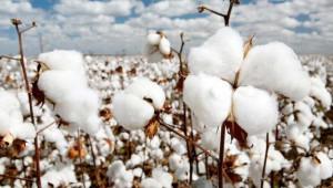 Pamuk, nohut ve buğday kaç liradan işlem gördü