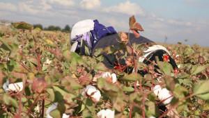 Tarım işçilerinin günlük ücretleri arttı