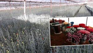 Tarım işçisiydi sera kurup çiçek üreticisi oldu
