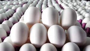 Tavuk yumurtası üretimi 1,7 milyar adet oldu