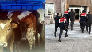 Konya'da çaldılar; Urfa'da yakalandılar