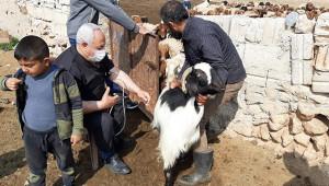 Suriye'deki hayvanlar kayıt altına alınıyor