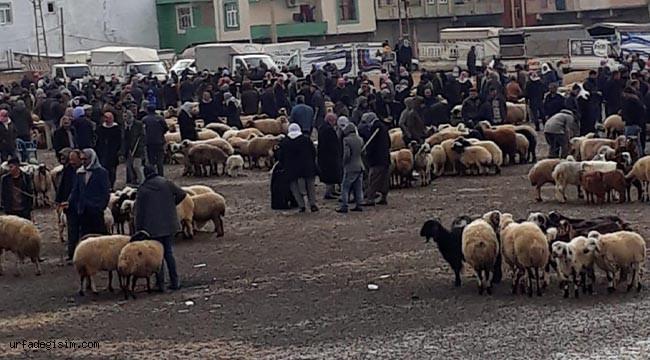 Viranşehir Hayvan Pazarı kapatıldı