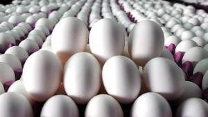 Yumurta fiyatı 2019'da azaldı