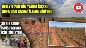 En fazla tarım işçisi, tarım kenti Urfa'dan gidiyor